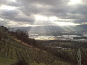The Best Wine From Slovenia