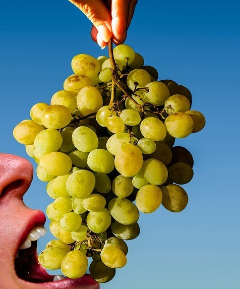 When to Harvest the Grapes