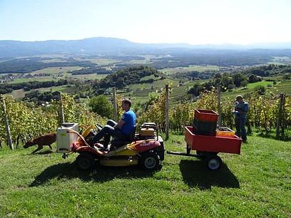 Slovenia's Agriculture