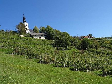 Viticulture as part of Slovenian agriculture