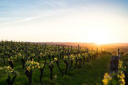 Climate Change and the Wine Industry
