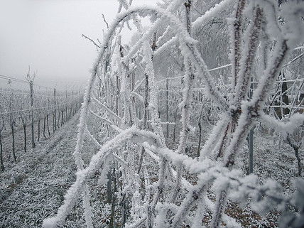 Where to Buy Ice Wine?