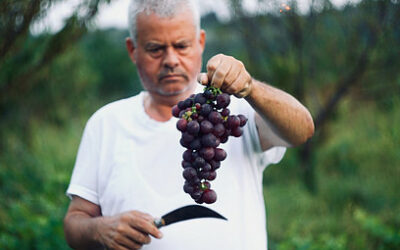 Chemical Composition of Grapes