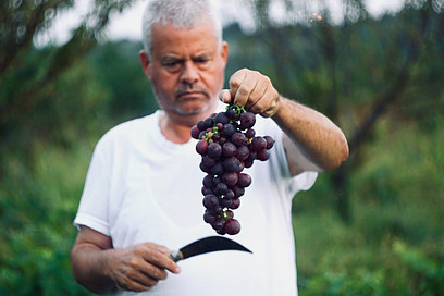 What is the chemical composition of grapes?