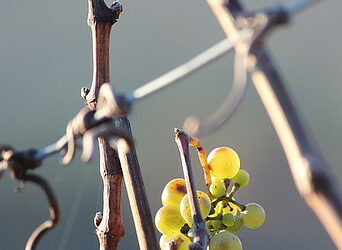 Why Is Ice Wine Expensive?