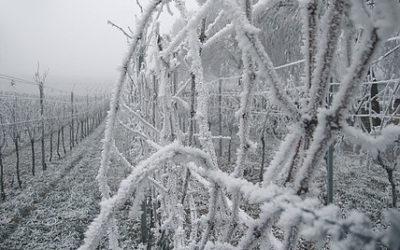 Where to Buy Ice Wine?